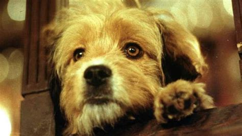 10 Most Loveable Dogs from the Big Screen   The Most 10 Of