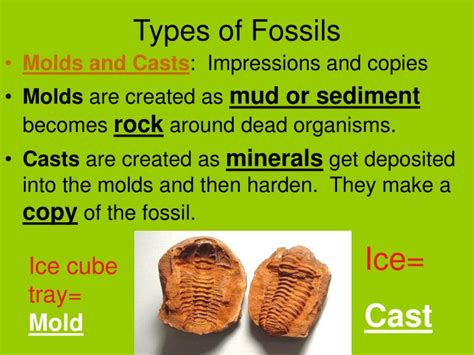 PPT - Fossils PowerPoint Presentation - ID:1128651