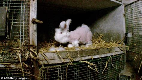 Shocking video reveals brutal treatment of rabbits bred in