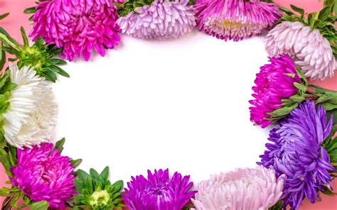 Download wallpapers Aster frame, flower frame, beautiful