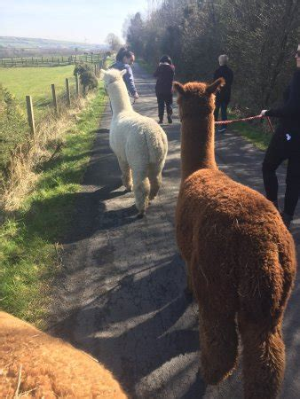 North Star Alpacas (Crook) - 2020 All You Need to Know