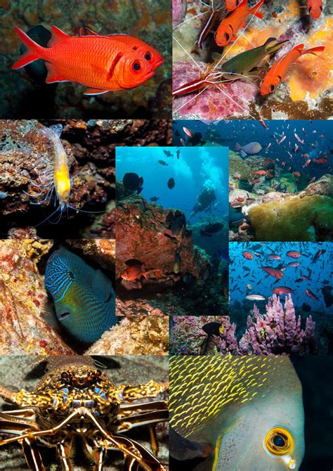 Marine Life Collage – Ascension Island Government